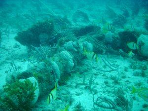 Juno Beach Wreck Anchor