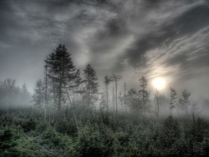 1024_haze_forest_wallpaper