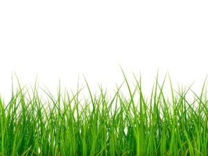 Grass-Fed vs Grain Fed Beef
