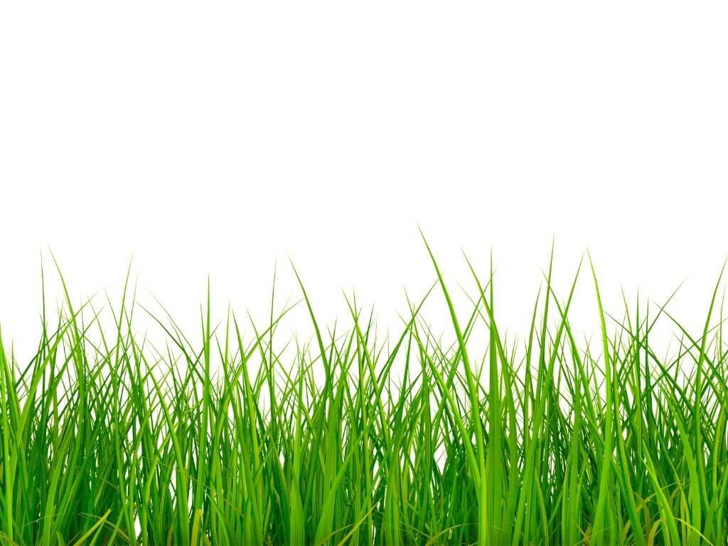 Grass Fed farmers