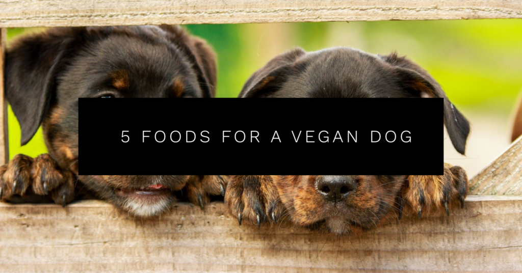 5 Foods for a Vegan Dog (Plant Based Eating for Animals)