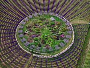 lavender-labyrinthjpg-33b96e17e96c5811_large