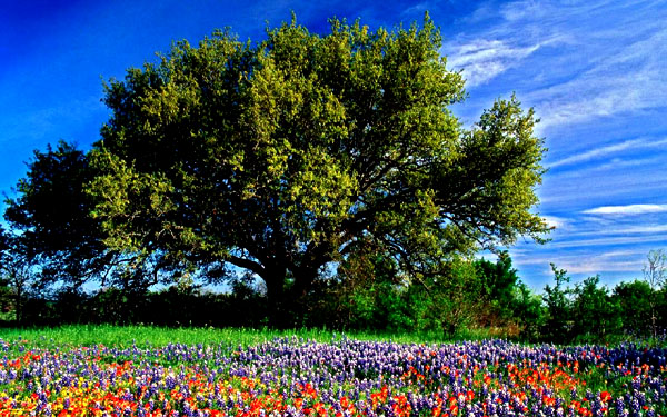 End Tree