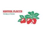 Koppes logo