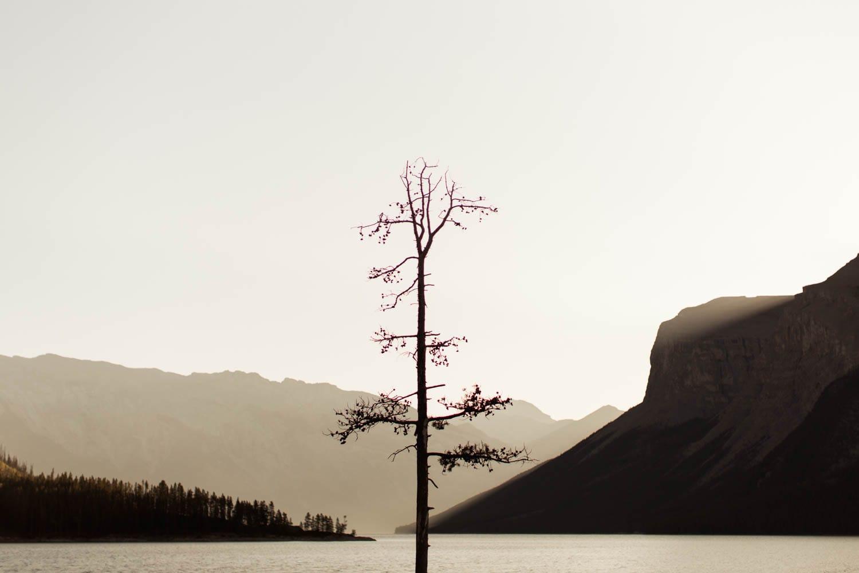Lake Minnewanka Tree