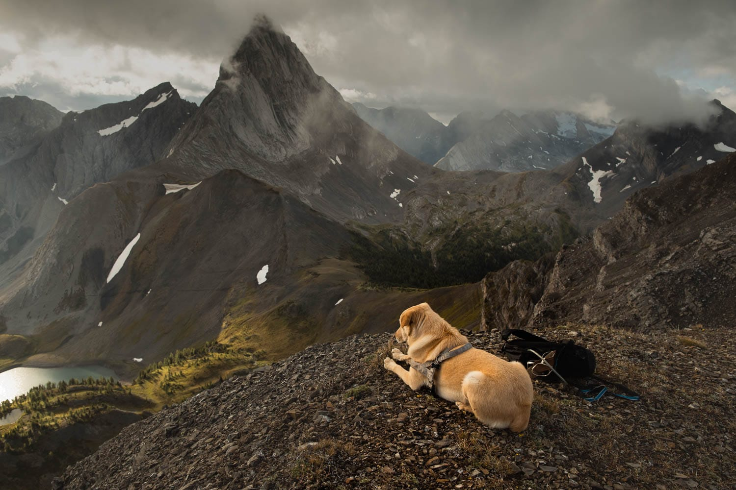 Dog on Mountain