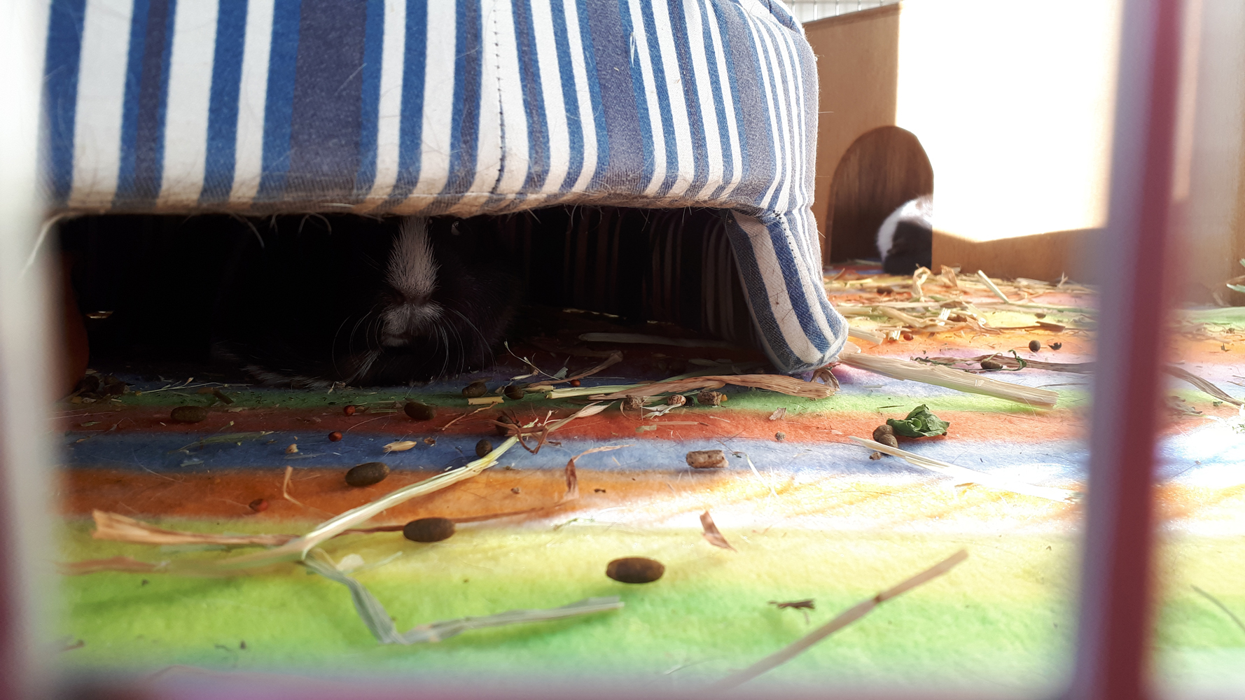 Some Guinea Pig Dwelling Upgrades…