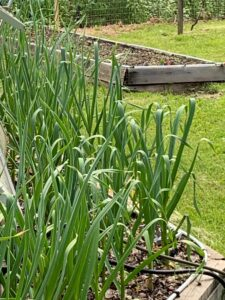 Gardens Planted – Now What
