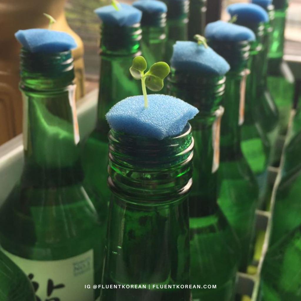 soju bottle plants