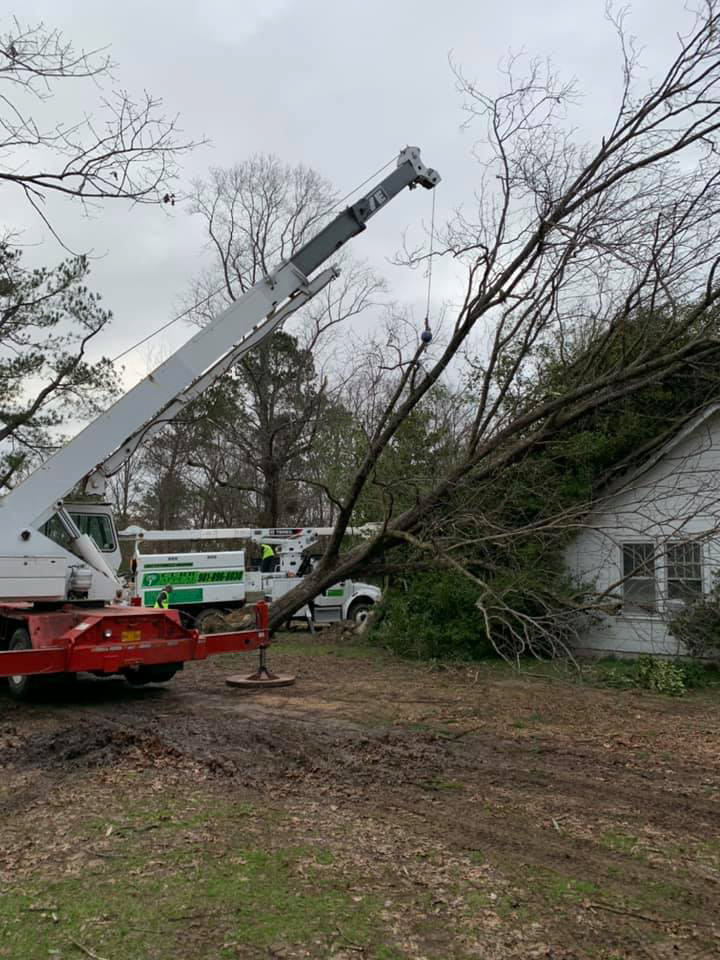 tree service_tree removal_land clearing_memphis_tn_hernando_ms_southaven_ms_horn_lake_ms_tree service near ms-08