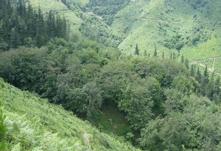 Desde la UPV:EHU se ha estudiado la capacidad del bosque autoctono para recolonizar las plantaciones de pino