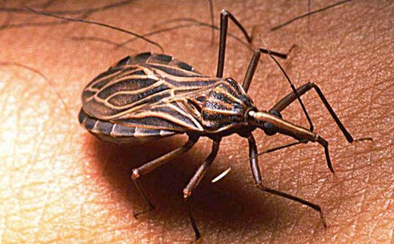 Una gran base de datos mundial para combatir el mal de Chagas