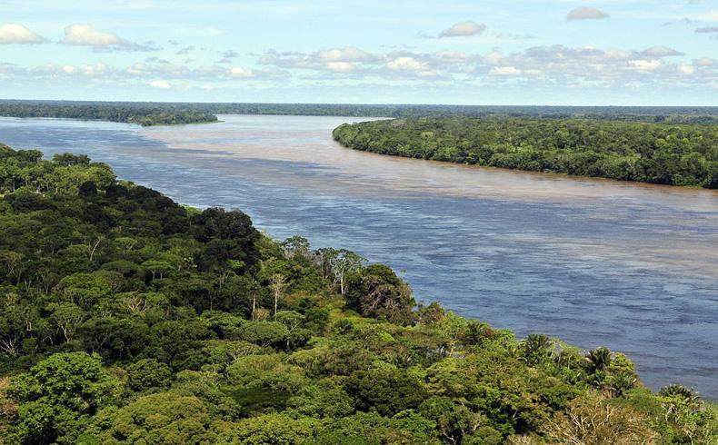 Monocultivos arrasan bosques amazónicos
