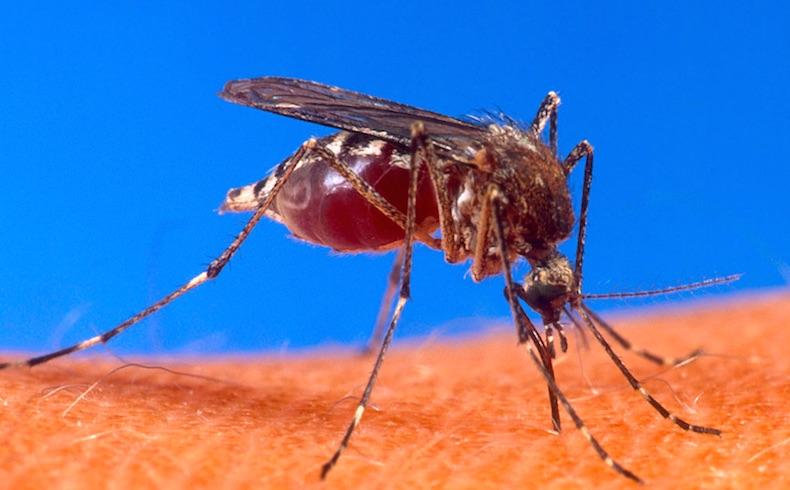 Alerta epidemiológica en Paraguay por avance del dengue y chikunguña