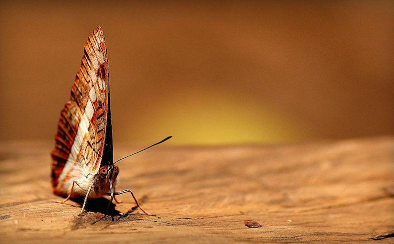 Podemos y el efecto mariposa en España