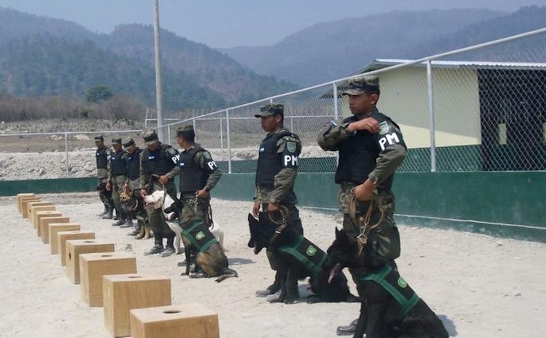 Honduras cuenta con el primer batallón canino de las Fuerzas Armadas para combatir el crimen