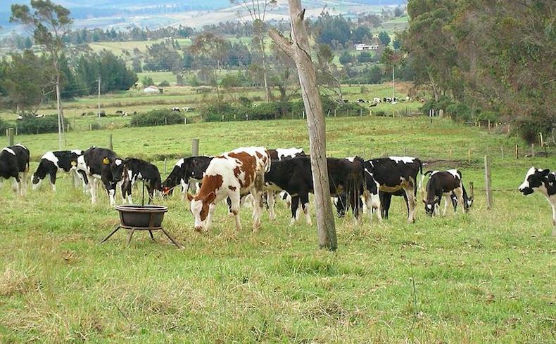 Paraguay y Ecuador: Estrechando la cooperación en ganadería