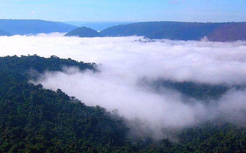 ¡Cuatro tesoros naturales de América Latina y el Caribe que necesitan tu ayuda!
