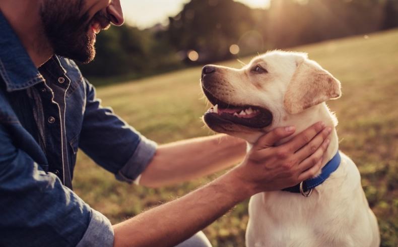 Día Mundial de los Animales: 6 percances frecuentes con perros
