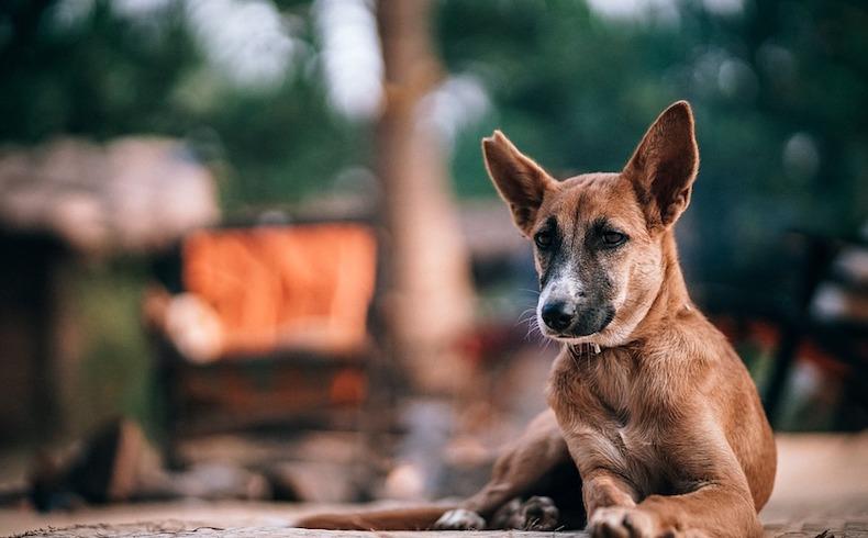 La vuelta a la normalidad incrementa el riesgo de accidentes con animales