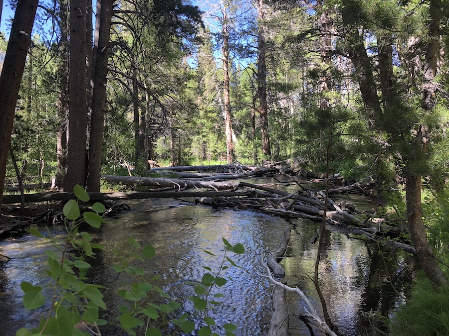 Mammoth Lakes Forest