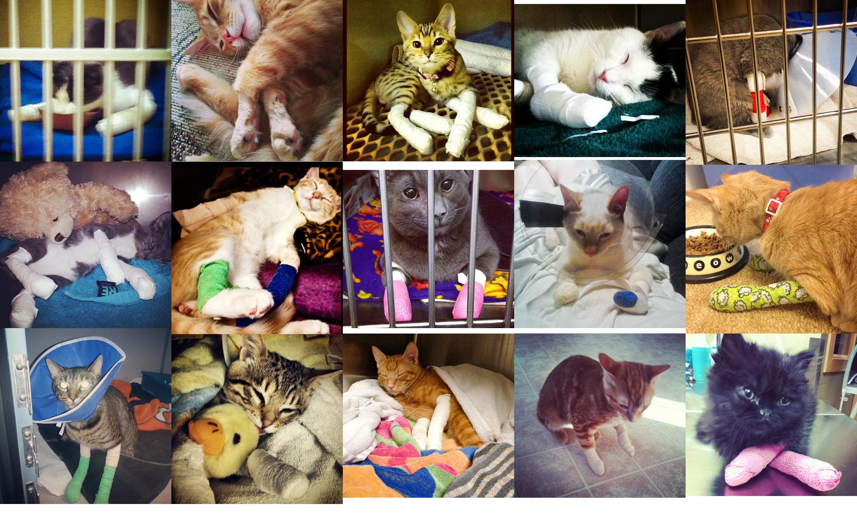 Banner Declawed Kitties