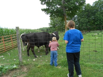 Large Animal Safety Walkthrough 6