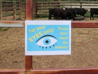 Large Animal Safety Walkthrough 5