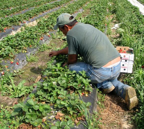 Farmers' Markets Walkthrough 3