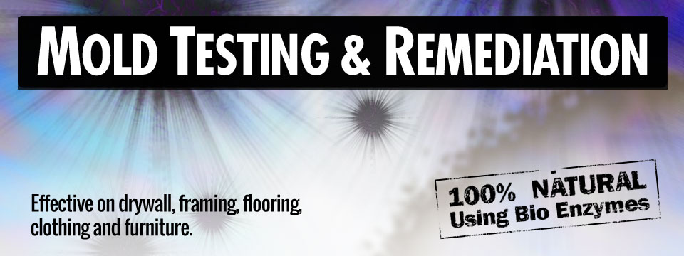 mold-testing-remediation-removal