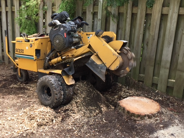 Limbwalker Tree Service london ontario (103)