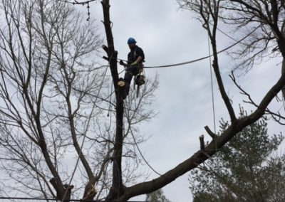 Limbwalker Tree Service london ontario (104)