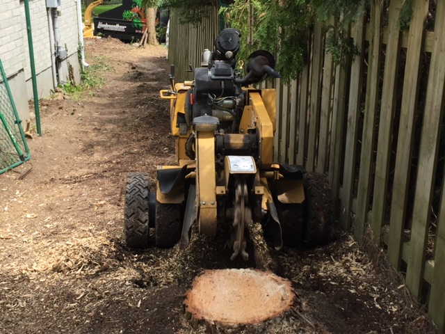 Limbwalker Tree Service london ontario (105)
