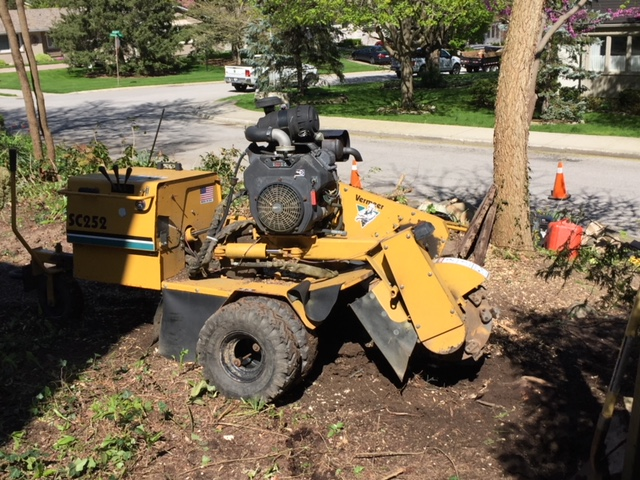 Limbwalker Tree Service london ontario (115)