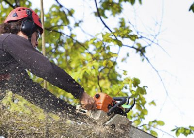 Limbwalker Tree Service London Professional Arborists
