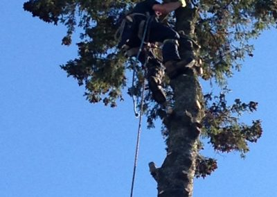 london tree services limbwalker (316)
