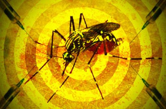 febre-amarela-41