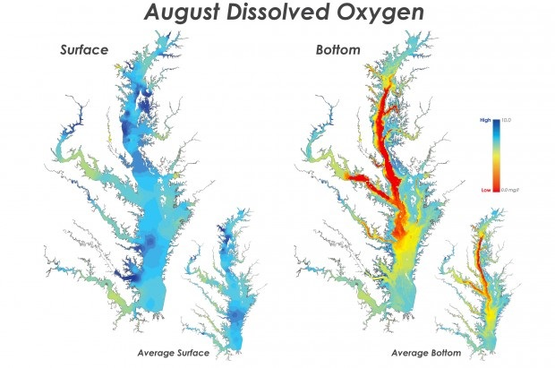 Oxygen-rich surface waters hide the decline of the Chesapeake Bay's benthic ecosystems