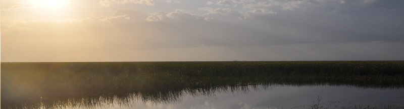 SFWMD argued that the sugarcane industry no longer needs federal oversight to ensure it isn't polluting the Everglades
