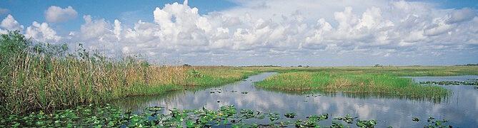 Everglades-800.jpg