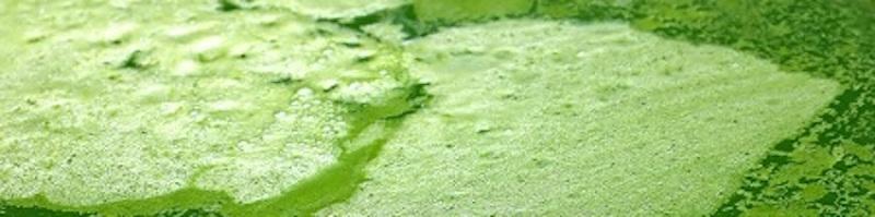 Green-Algae-Water_800.jpg