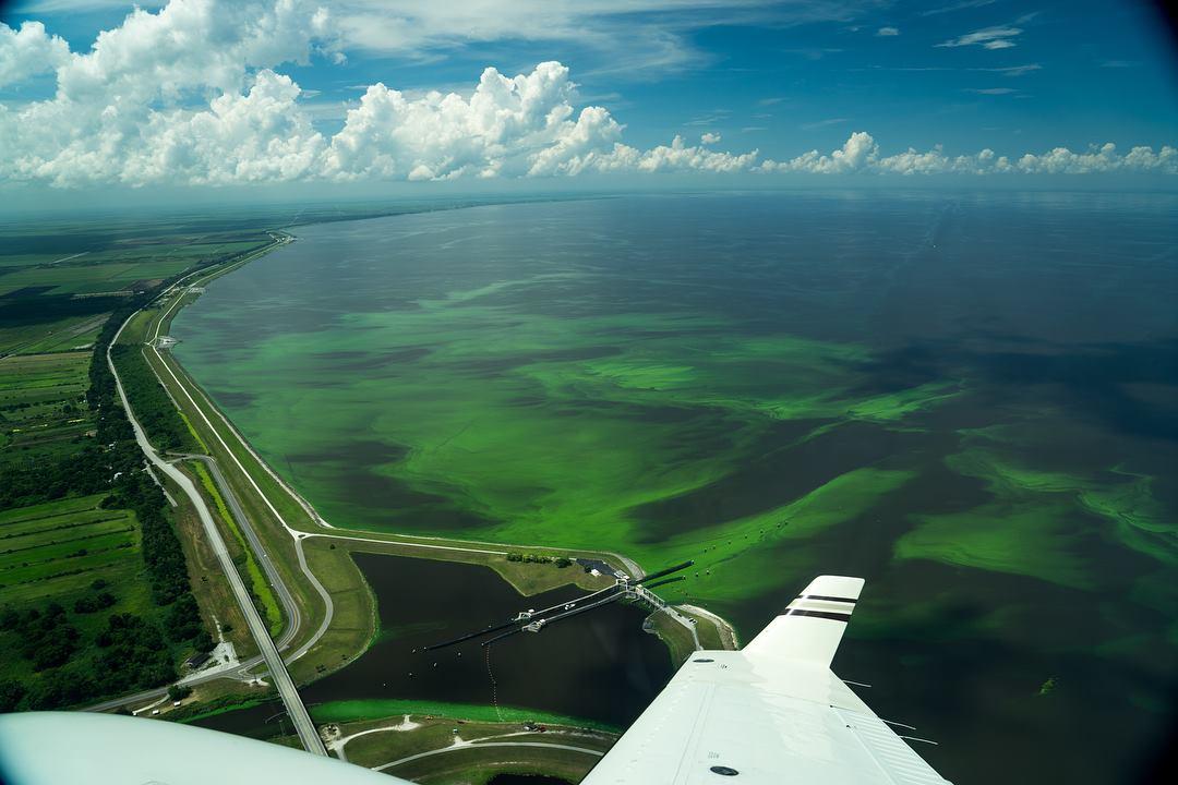 Algae on Lake Okeechobee near Port Mayaca. Photo by Jacqui Thurlow-Lippisch.