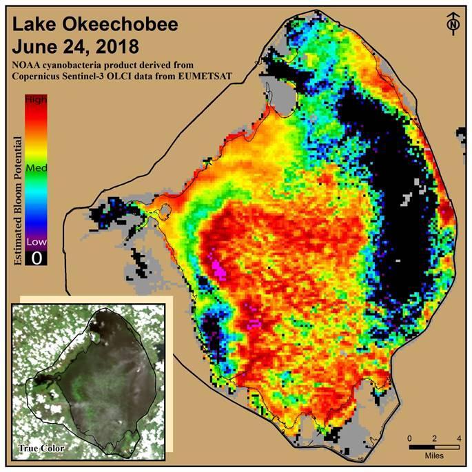 Cyanobacteria blooms cover most of Lake Okeechobee