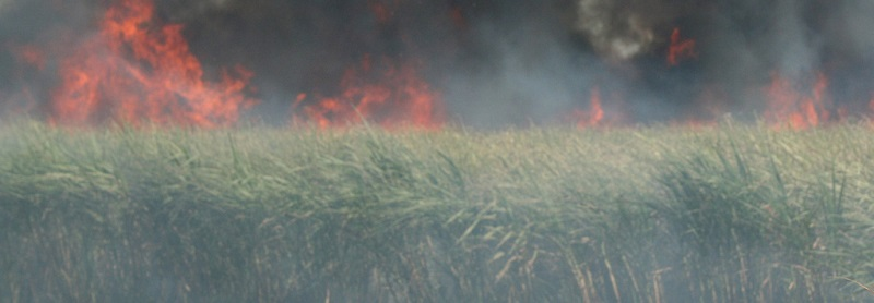 When the sugarcane industry is your neighbor, smoke is part of everyday life. So is asthma.