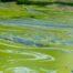 Cyanobacteria Outbreak, 2018