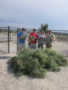 They removed A LOT of Russian Thistle from the shelter's campus - especially in the dog yards.