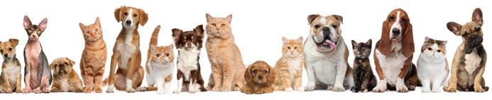 adopt-animal-montana