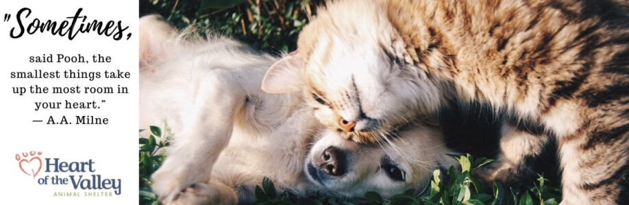 Honor a beloved pet or animal lover with a donation to HOV