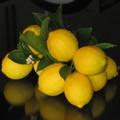 organic meyer lemons