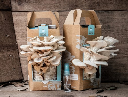 Pearly Oyster Mushroom Growing Kit in the Food52 Shop